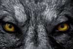 Beware of false prophets, who come to you in sheep's clothing, but inwardly they are ravenous wolves - Matt. 7:15
